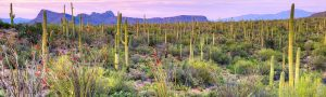 [tucson-sunset-in-saguaro-national-park_1440x430-300x90]